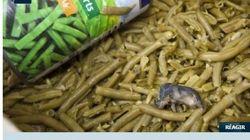 Topo morto nei fagiolini