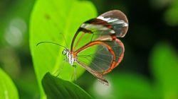 È vera questa farfalla?