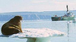 Artico: i ghiacci resistono allo scioglimento