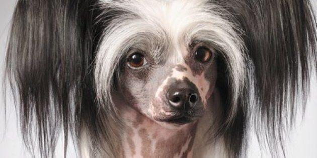Ritratto di animale: Tim Flach fa posare cani, cavalli e scimmie e li rende umani