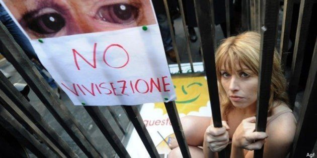 Stop vivisezione: raccolta firme contro i pericoli della sperimentazione animale
