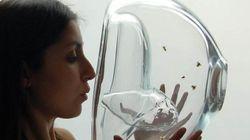 Tumori e diabete, la diagnosi arriva dalle api (FOTO,