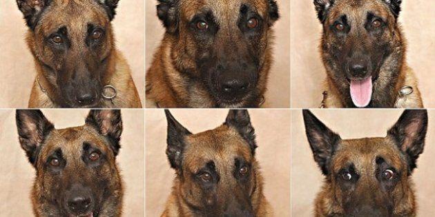Riconoscere le emozioni dei cani: secondo uno studio americano si può