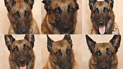 E' possibile sapere quello che pensa il vostro cane