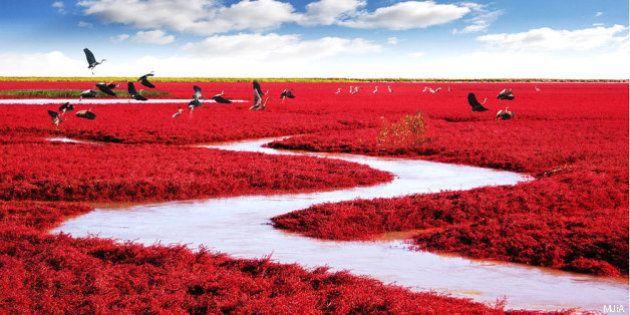 25 posti incredibili al mondo: dai laghi rosa ai campi di tulipani, dalla Cina all'Alaska, un'esplosione...