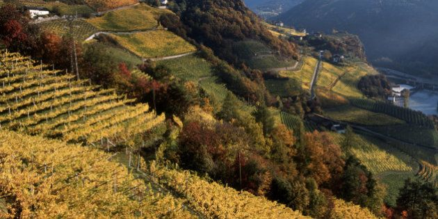 #CampoLibero, 18 azioni per far crescere l'agroalimentare italiano. Le proposte (aperte) del ministro