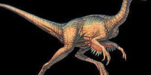 Meteoriti: quello che uccise i dinosauri 66 milioni di anni fa e quello caduto in Italia nel