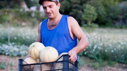 La metà dei giovani tra i 18 e i 35 anni sogna di lavorare in campagna