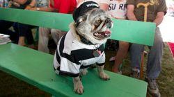 Vinca il peggiore: in California la gara dei cani più brutti del mondo