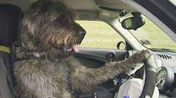 Che guida da cani! (FOTO,