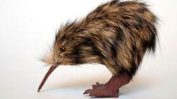 Morti 8 Kiwi in Nuova Zelanda. Sono rimasti solo 400 esemplari al mondo (FOTO,