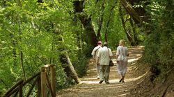 Domani il Papa ad Assisi: pronto il bosco di San Francesco restaurato dal Fai
