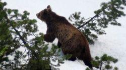 Il letargo dell'orso e la stupidità
