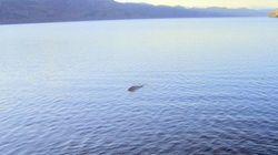 Mostro di Loch Ness. La fotografia di Nessie è un falso!