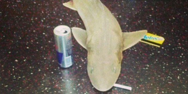 Lo squalo della metro di New York: caso risolto