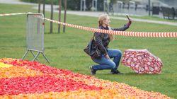 Ολλανδία: Οι διάσημες τουλίπες κινδυνεύουν από τις