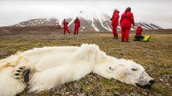 Se l'Artico