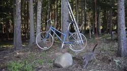 Non riuscirete mai a immaginare dove porta questa bici