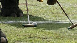 Una partita a polo... con l'elefante