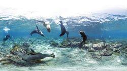 La Grande Barriera Corallina a 360 gradi (FOTO,