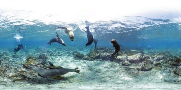 Grande Barriera Corallina, con Google Street View le foto a 360 gradi. Un tour mozzafiato (FOTO,