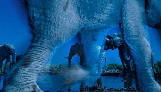 I vincitori del Wildlife Photographer of the Year 2013
