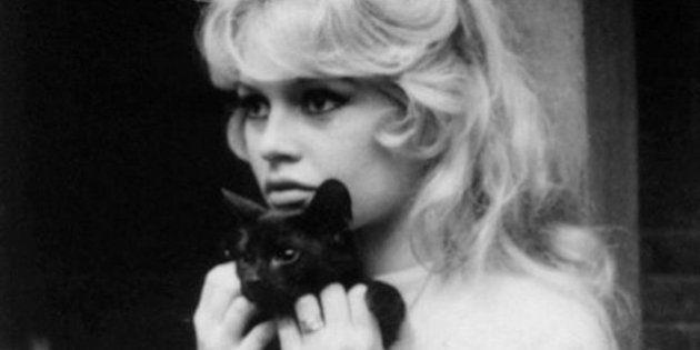 Brigitte Bardot, Marlon Brando, Cher e la passione per i gatti neri. Contro ogni superstizione