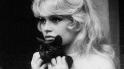 La passione delle star per i gatti neri. Contro ogni superstizione