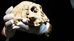 Dmanisi. La scoperta che cambia la storia dell'uomo (VIDEO,