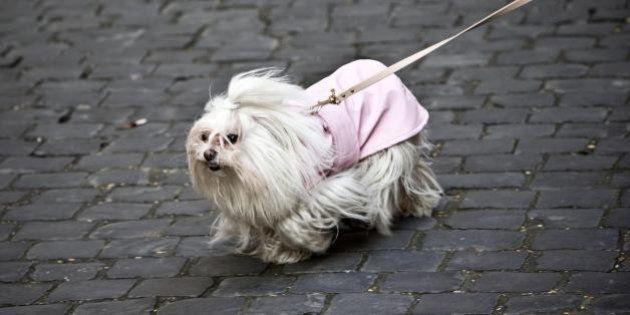 Napoli, esame del dna contro escrementi dei cani in strada. Multe per i trasgressori fino a 155