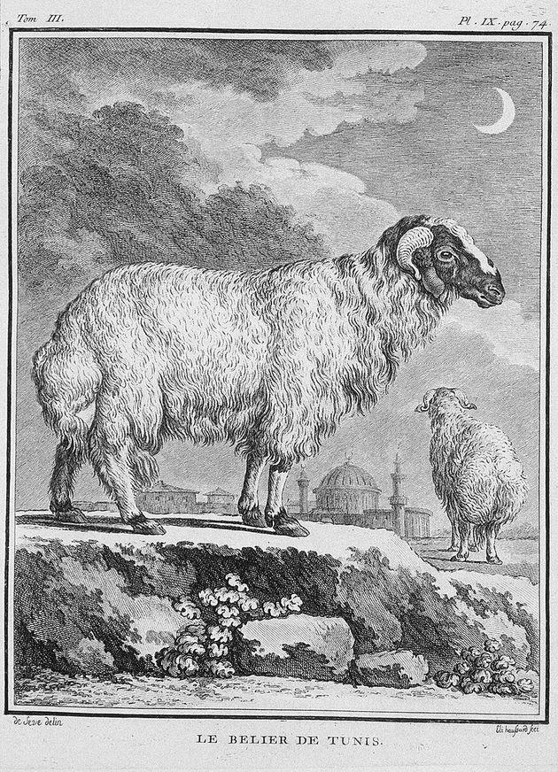 Sève, Jacques de. Dessinateur - Guttenberg, Carl Gottlieb (1743-1790). Graveur - Mansarol. Graveur...