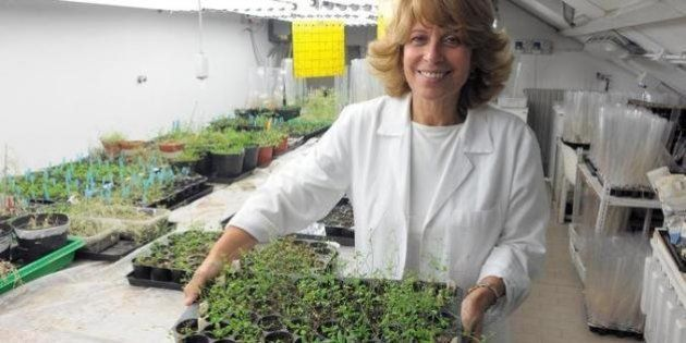 Science for Peace 2013, Chiara Tonelli: