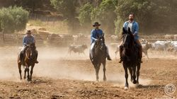 Masterchef 3, giudici cowboy in Maremma