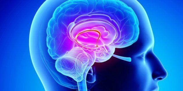 Cervello e opinioni politiche, per la neuroscienza c'è una relazione. Lo studio di John Hibbing dell'Università...