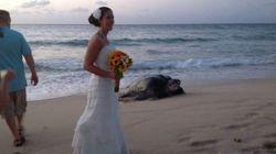 Un ospite inaspettato al matrimonio