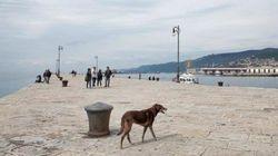 A Gorizia e Trieste, dove in molti hanno nostalgia della