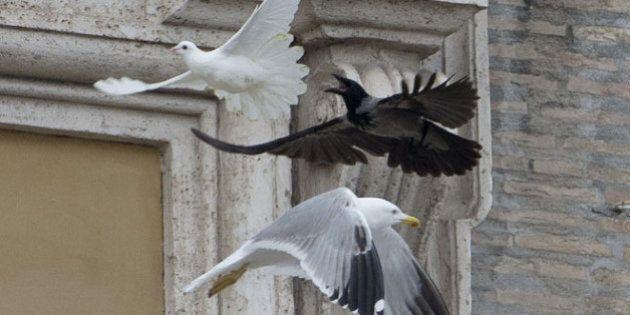 Colombe del Papa attaccate da un corvo e un gabbiano, al termine dell'Angelus in Piazza San Pietro