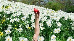 Pasquetta: 5 consigli per rotolarsi sull'erba con