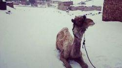 Nevica in Cairo. Non succedeva da 112 anni