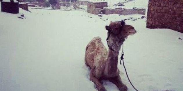 Neve al Cairo. Non succedeva da 112 anni. Le foto e lo stupore degli abitanti