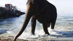 Anche gli elefanti fanno il bagno. In