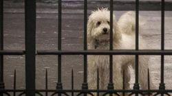 Dudù: la saga del cagnolino della Pascale si fa