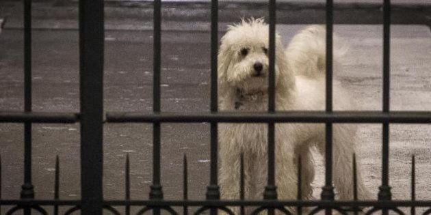 Francesca Pascale, Dudù: il cagnolino di Silvio Berlusconi viene da un'allevamento dove maltrattavano...