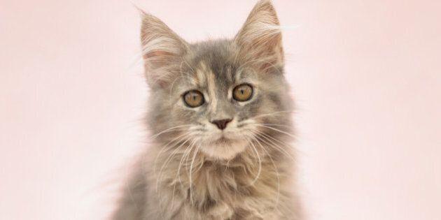 10 cibi da non dare al proprio gatto: latte, uova e uva passa sono dannosi per il tuo amico a quattro...