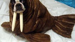 Animali vestiti da... animali