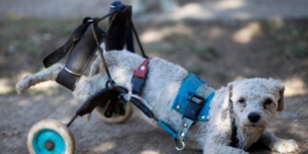 Messico, il centro di recupero per i cani