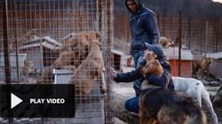 Sochi, le autorità ordinano lo sterminio dei cani