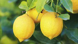 Che cosa c'entrano i limoni con la legge di