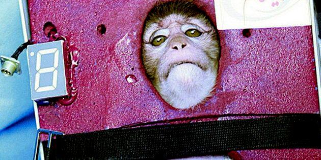 Dalla parte della scimmietta lanciata nello spazio. Proteste degli animalisti