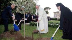 Il Papa pianta un ulivo nei giardini Vaticani (VIDEO,